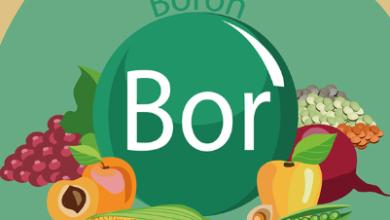 عنصر البورون