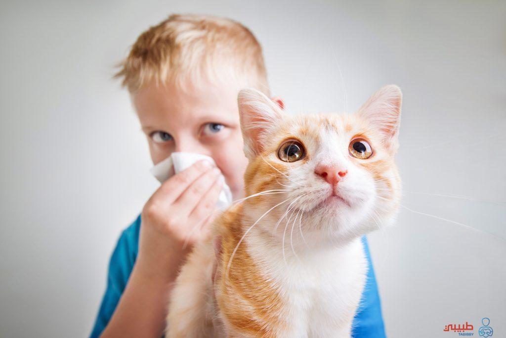 حساسية القطط وطرق الوقاية
