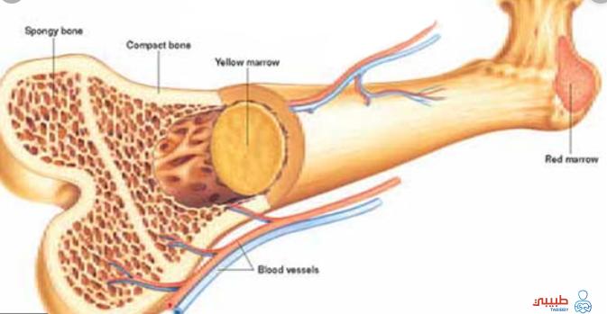 تليف نخاع العظم ما هو وما هي الأعراض المصاحبة له