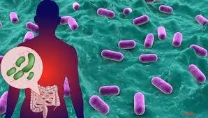 بكتيريا القولون