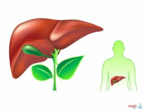 علامات سلامة الكبد أهم 7 علامات للتأكد من سلامة الكبد طبيبي